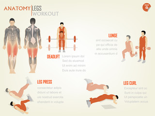 beautiful design info graphic of abdominal legs workout consist of deadlift,lunge,leg press and leg curl