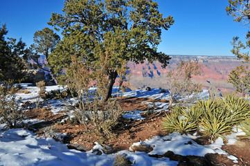 Grand Canyon National Park Landscape