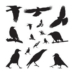 Australian Magpie Silhouettes Set