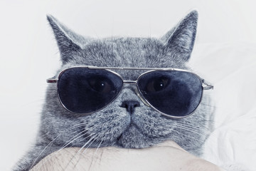 Funny muzzle of gray cat in sunglasses