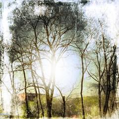 Vintage bare trees background