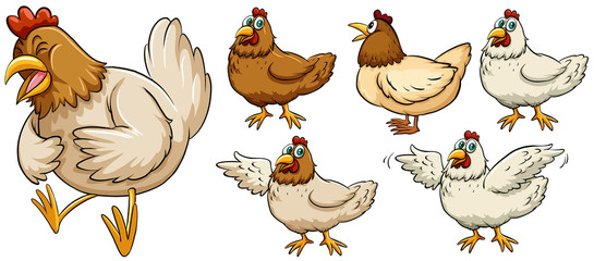 Farm chicken in different poses