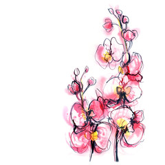 two branches of pink orchid on white background/ watercolor painting