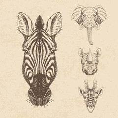 Vector set of hand drawn animal. Vintage illustration with eleph