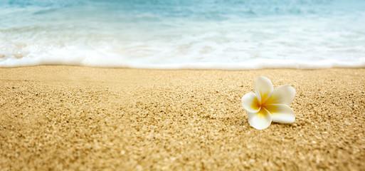 Printed kitchen splashbacks Plumeria Plumeria alba (White Frangipani) on sandy beach