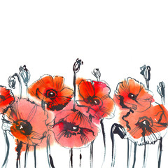 red poppies on white background/ watercolor painting