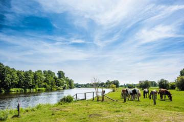Fototapeta Horses on a meadow