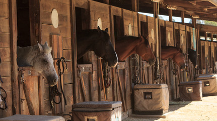 Louisville, Kentucky, United States, — July 2015: Brown bay horse view out the stable in a barn