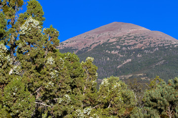 Great Basin National Park, Rocky Mountain Juniper and Wheeler Peak