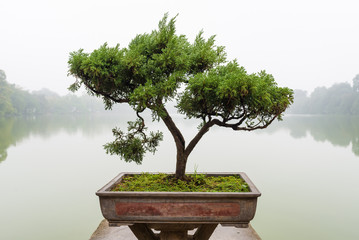 Foto op Plexiglas Bonsai Japanese bonsai tree in pot at zen garden Bonsai is a Japanese art form using trees grown in containers