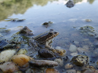 Tuinposter Rivier Small frog in nature