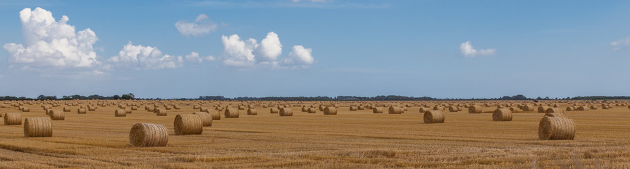 Wide hay bales in a lincolnshire field