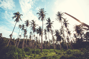palm trees garden against blue sky retro background
