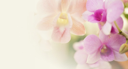 Tuinposter Orchidee vintage color orchids in soft color and blur style for background