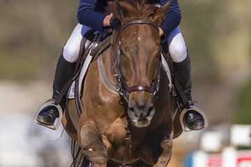Horse rider equestrian show jumping action