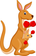 Kangaroo boxing
