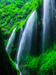 Wall Mural - Waterfall in the green forest