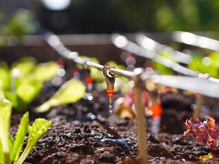 irrigation system in raised garden bed