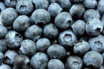Close up Fresh Organic picked Blueberries