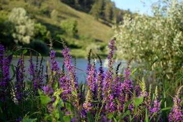 wildflowers near water