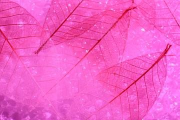 Keuken foto achterwand Decoratief nervenblad Pink skeleton leaves background