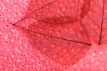 Keuken foto achterwand Decoratief nervenblad Red skeleton leaves background