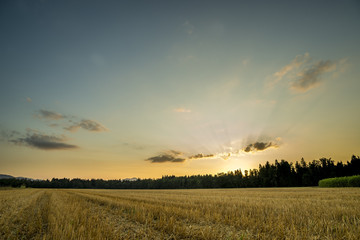 Fotorollo Landschappen Panorama View of an Open Field During Sunset