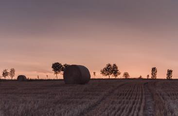Fotoväggar - Feierabend, Kornfeld am Abend, Sonnenuntergang