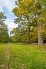 Landscape Bialowieza Forest - fototapety na wymiar