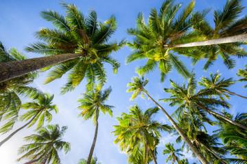 Palmen in Miami Beach
