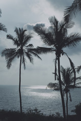 Palm trees and the sea