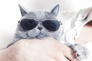 Funny muzzle of gray British cat in sunglasses