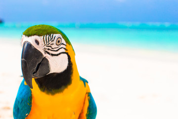 Foto op Canvas Papegaai Adorable bright colorful parrot on the white sand in the