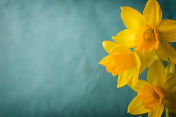 Foto op Plexiglas Narcis Daffodils.