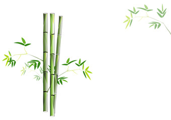 bamboo on white background,Vector illustration