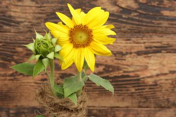 Sonnenblume mit Knospe
