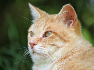 茶トラ猫の顔