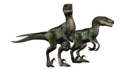 two velociraptors dinosaurs - isolated on white background