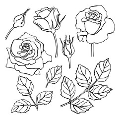 Vector set of hand-draw line rose collection.
