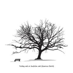 Quercus Cerris (Turkey oak) Silhouette