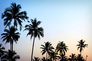 palm trees sunset golden blue sky backlight in mediterranean