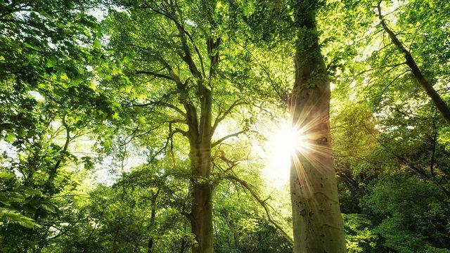 Sonnenstern im Wald