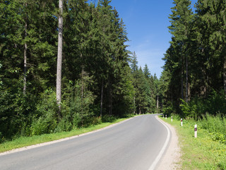 road in the forest in summer