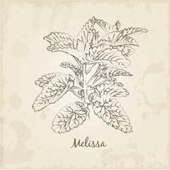 Melissa.