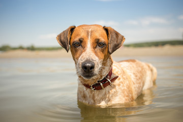 Adopted mixed breed dog on summer vacation