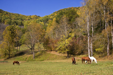 Horses in a Mountain Field in Autumn