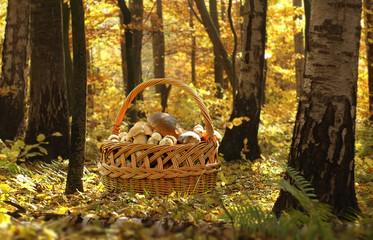 Basket of Boletus mushroom in forest