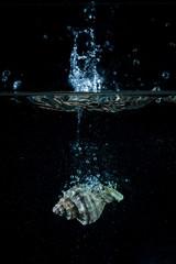 Una conchiglia marina cadono in acqua creando onde , bolle e schizzi . Luce radente blu su sfondo nero. Foto in studio