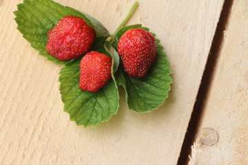 The ripe berries of strawberry lying on a support from a tree in a garden