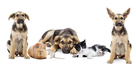 Puppy and kitten and rodents